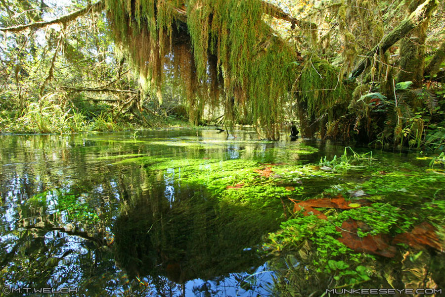 Hoh Rainforest | Enchanting Places to Visit | Pinterest